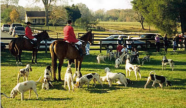 Hunters and hounds prepare for the hunt